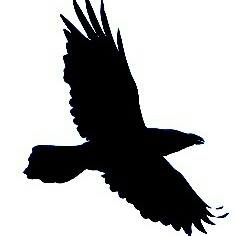 Grey-Raven